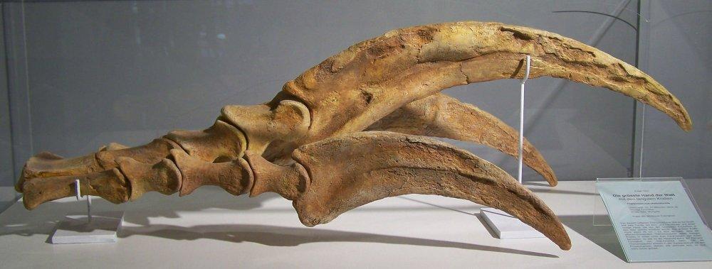 1920px-Therizinosaurus_claw.thumb.jpg.371846c18d19873ebfa4df0050724818.jpg