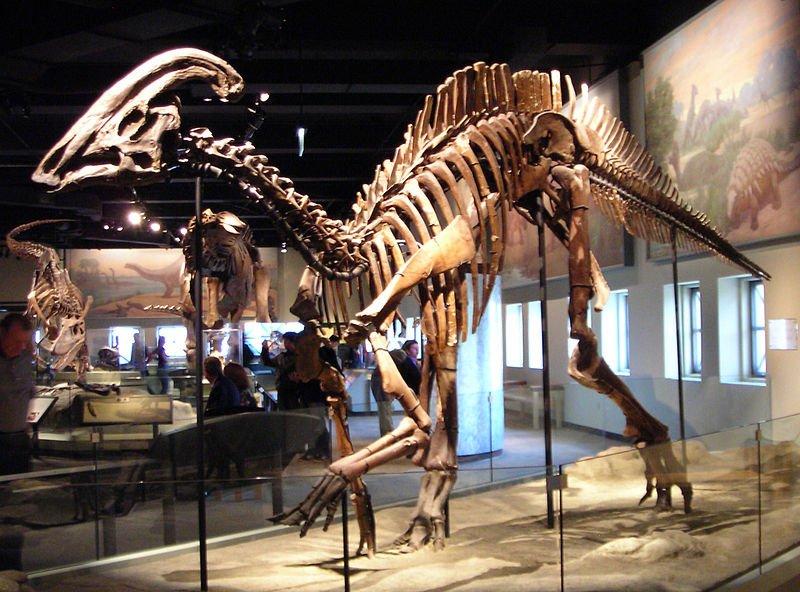 800px-Parasaurolophus_cyrtocristatus.jpg.68875c4a0bf095b58e1957a64f7a7ac7.jpg