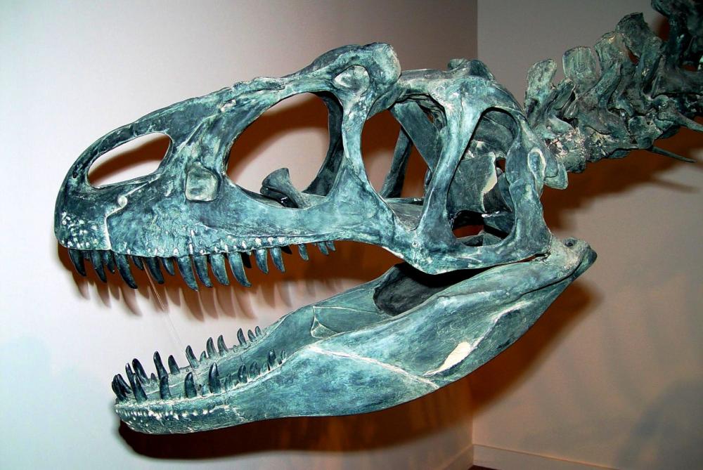 FossileAllo1.thumb.png.da985e7edc87defd4af44f0ecc01d710.png