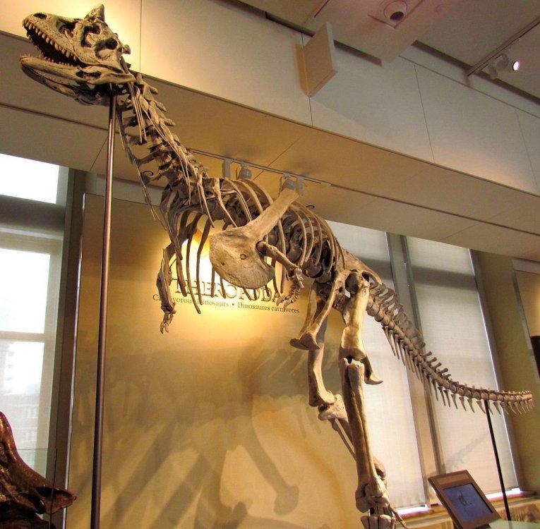 308896564_Carnotaurus_sastrei_Ottawa.thumb.jpg.5ab4471ae2bef025a9036ed7087383d5.jpg
