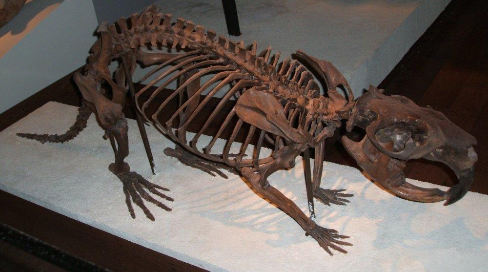 1920px-Giant-beaver-fieldmuseum.thumb.jpg.e3bee877095c2003a75349c94581402b.jpg