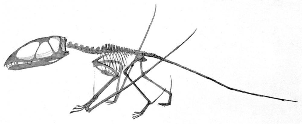 Dimorphodon_macronyx.thumb.jpg.355582c93abe764ddbeccf80c28b0f3f.jpg